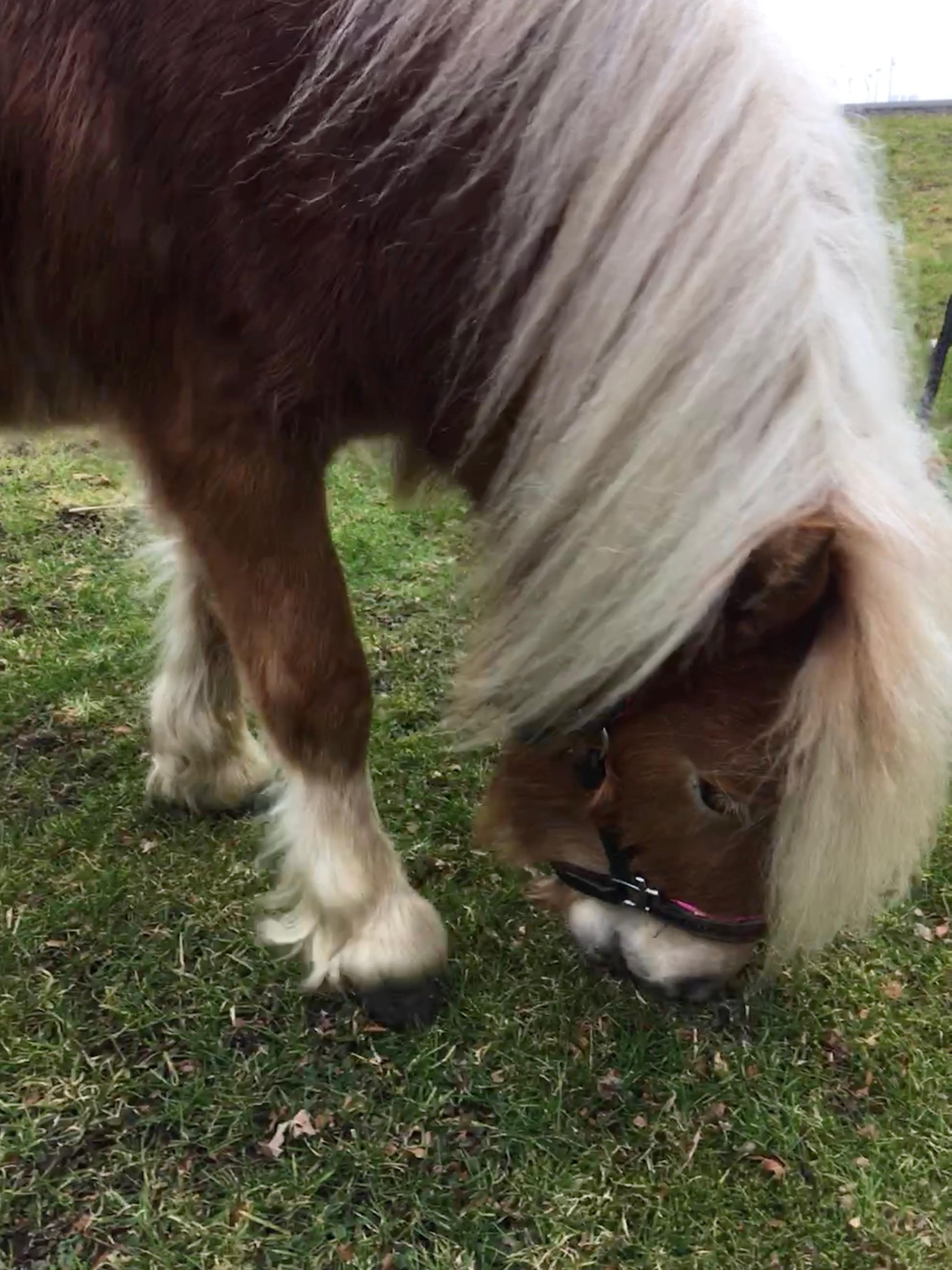 Pony Fara